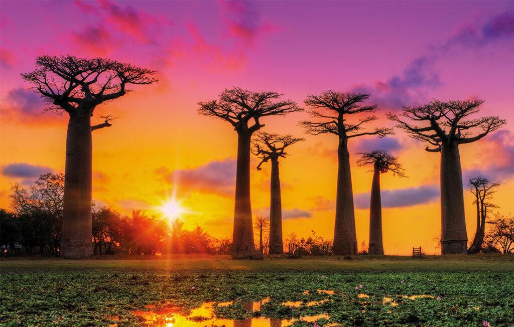Trapèze des Mascareignes - Madagascar
